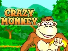 Crazy Monkey slot free play